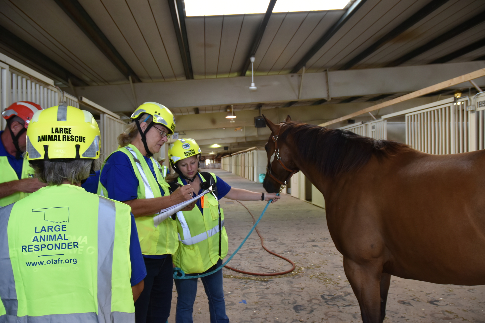 volunteers with the Large Animal Response Team assess a horse
