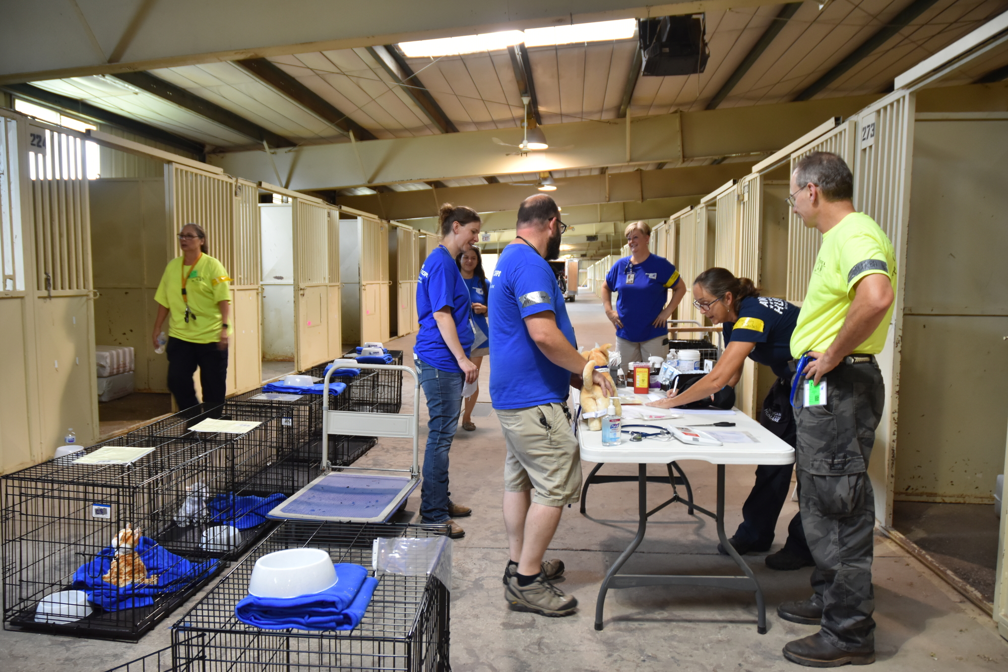 volunteers practice establishing a shelter for small animals