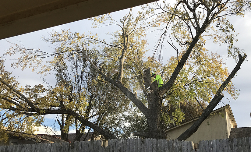 Storm-damage-tree-trimming-small