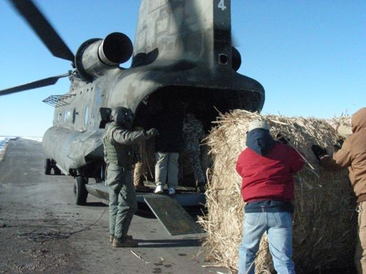 Man guiding hay bale as it is pushed into Chinook